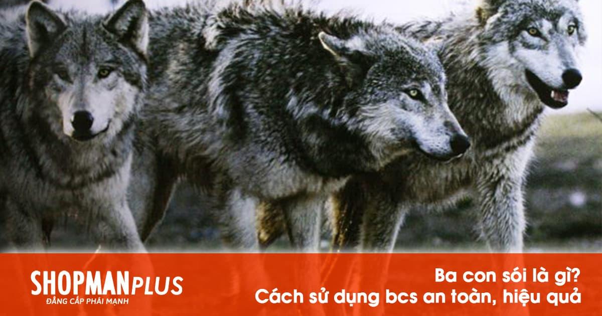 Ba con sói là gì? Cách sử dụng BCS ba con sói an toàn